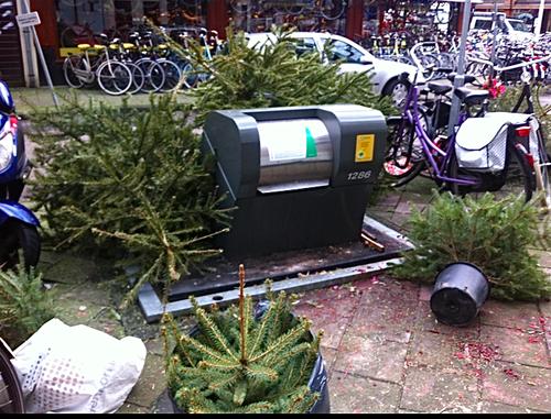 Christmas trees.png