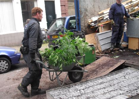 weed by the wheelbarrow.jpg